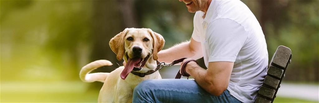 5% discount* for friends of Dogs on Deployment. Start your free quote!