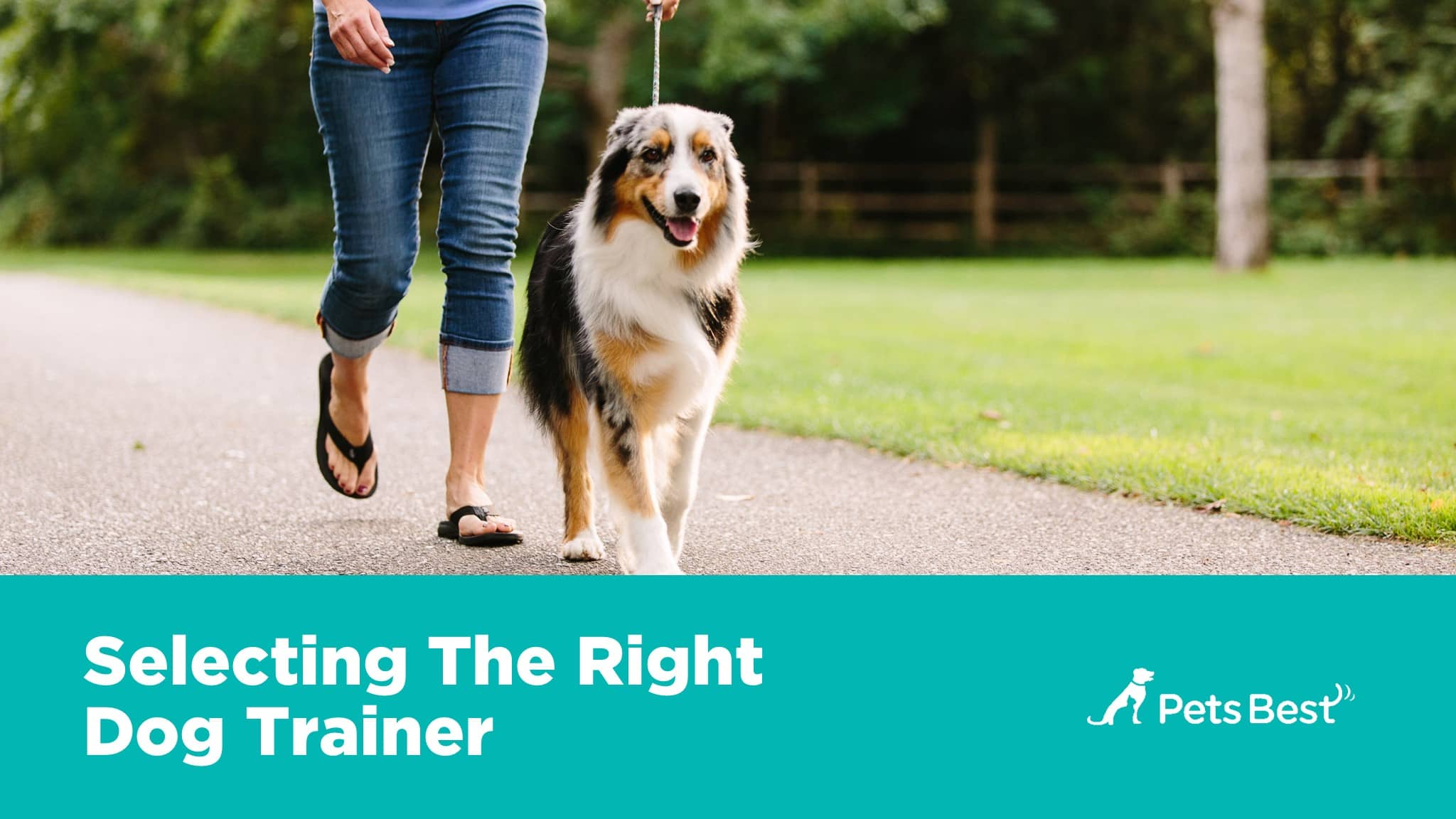 An Owners Guide to Great Pet Health pictures