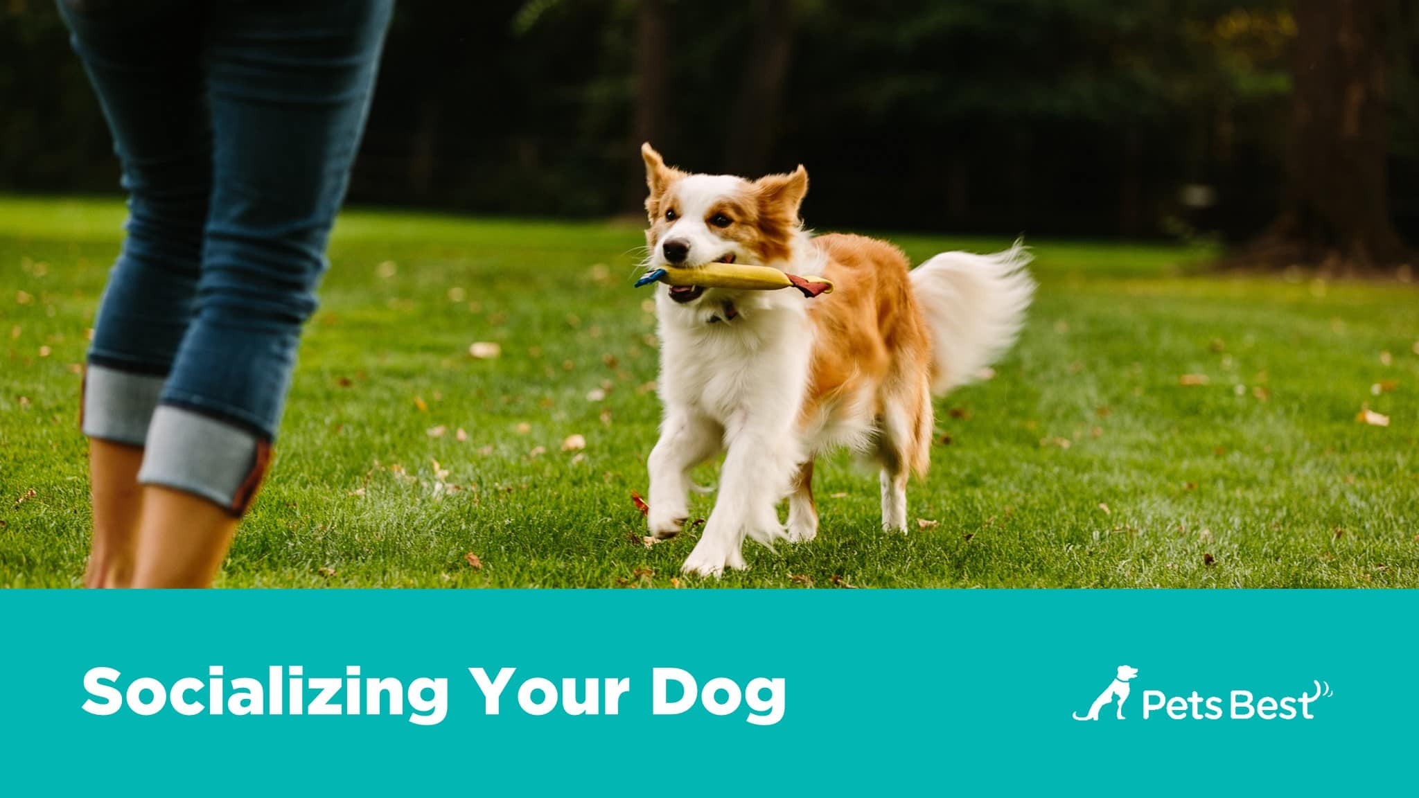 New Dog Owner's Guide| Pets Best tips for bringing your new dog home