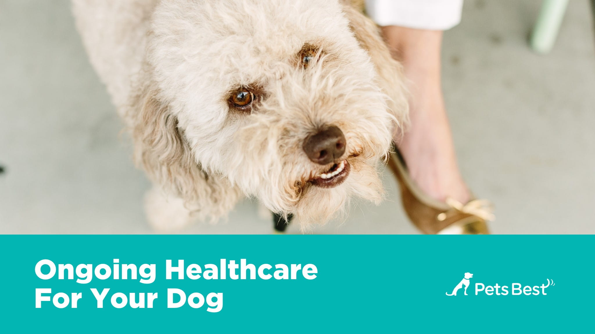 An Owners Guide to Great Pet Health