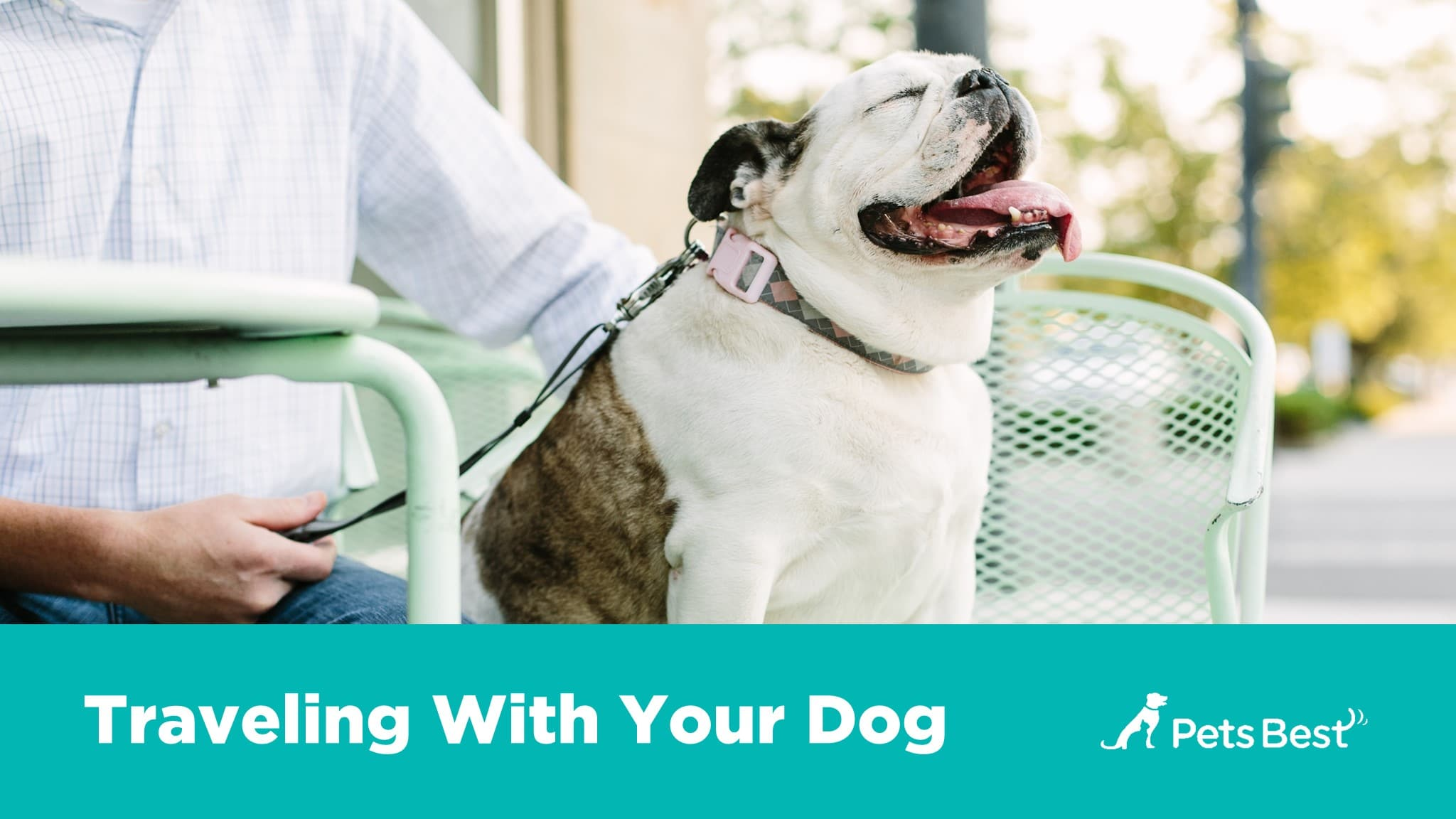 Watch An Owners Guide to Great Pet Health video
