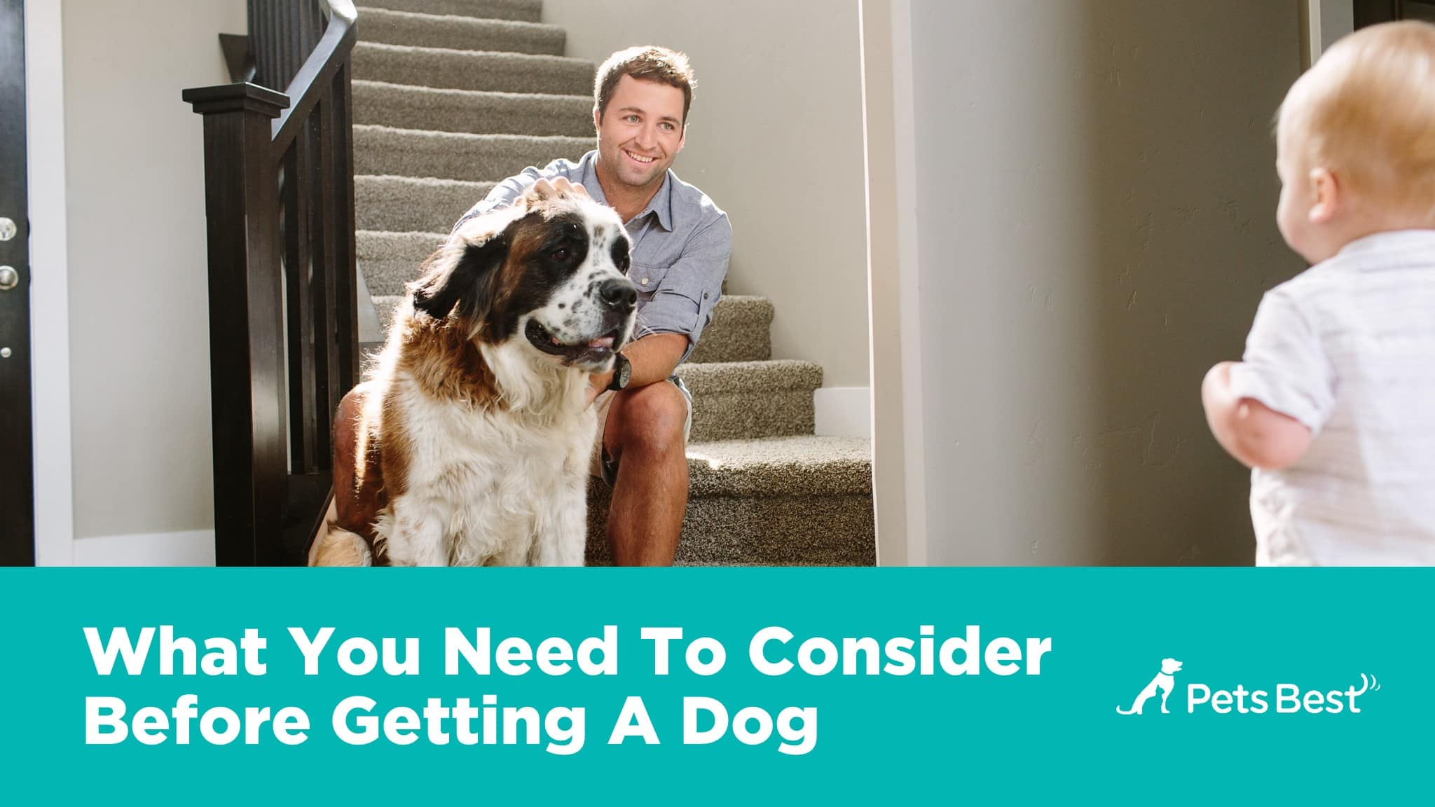 new-dog-owners-guide-3