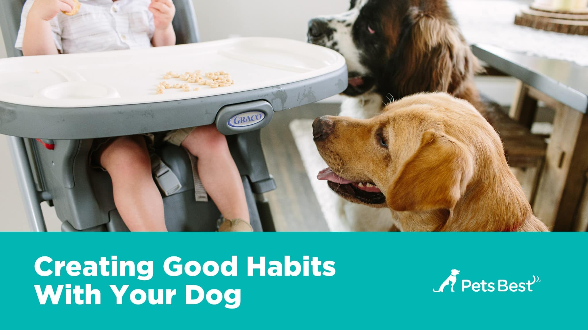 pictures An Owners Guide to Great Pet Health