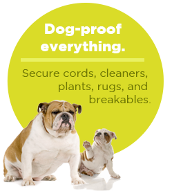 pullquote-dogproof-everything