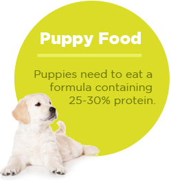pullquote-puppy-food-protein