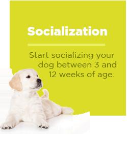 pullquote-puppy-socialization