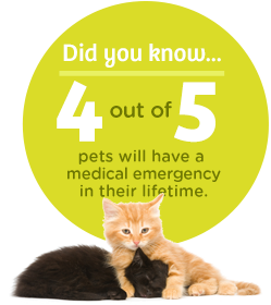 Get cat insurance offered by Pets Best!