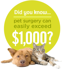 Did you know... pet surgery can easily exceed $1,000?