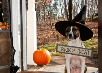 The top pet Halloween costumes and costume safety from Pets Best Pet Health Insurance for dogs and cats.