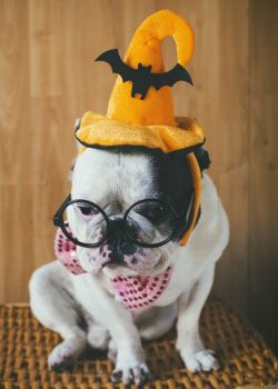 3 tips from Pets Best pet health insurance for trick-or-treating with your dog.