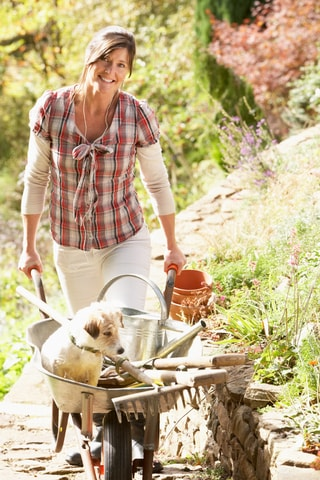 Pet proofing your garden