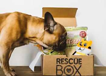 RescueBox.