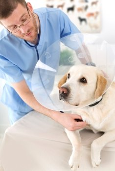 Pet Insurance 101: 5 Reasons You Need Pet Insurance