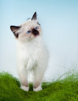 A cute kitten sits outside in the grass.