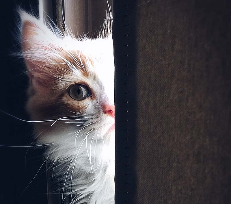 Find out if adopting a cat is right for you.