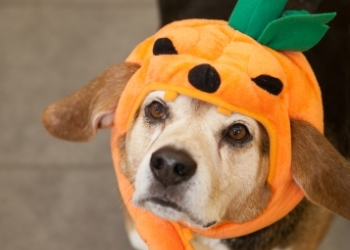 Can Dogs and Cats Eat Pumpkin?
