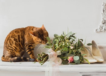 Incorporate your cat in wedding pictures.
