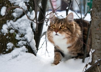 Winter and Cold Weather Hazards for Cats