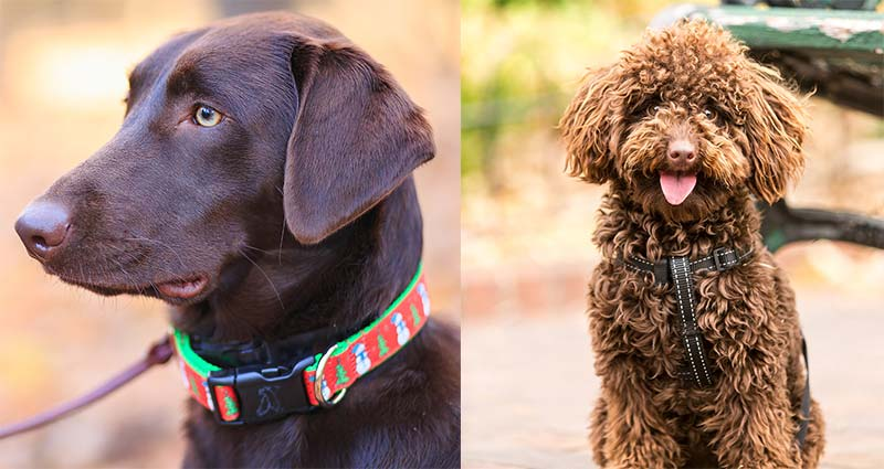 Choosing the correct collar and leash for your pet.