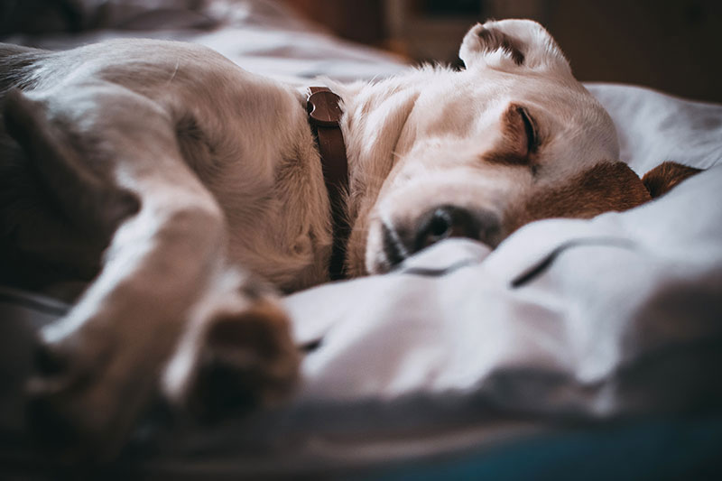 These common dog symptoms should be taken seriously.
