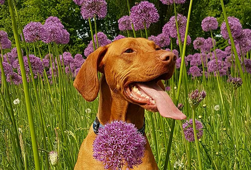 Beware of these common garden dangers that are toxic to pets.