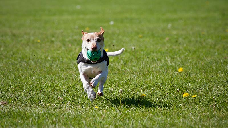 Follow these dog park safety tips for your next visit to the dog park.