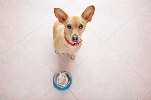 Dog food recalls can affect more then one brand. Check if your dog's food is safe.