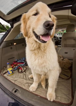 Road tripping with your pet!