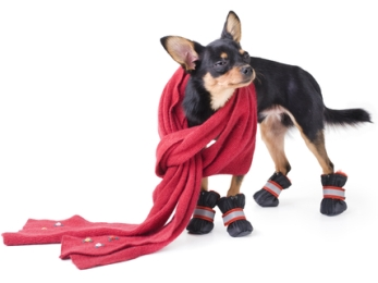 6 Reasons Your Dog May Shiver