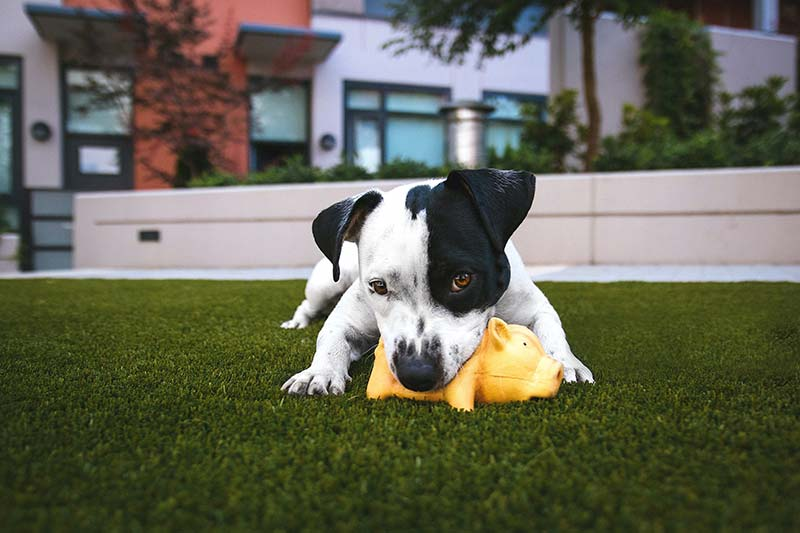 Check out these tips for finding the perfect doggy daycare.