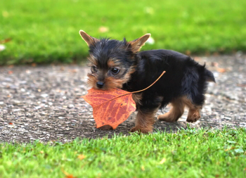 Five Pet Hazards to Watch for This Fall