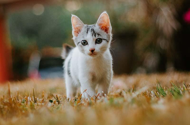 How to Foster a Kitten | Pets Best