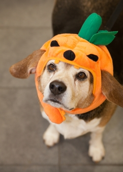 5 Dangerous Halloween Candies for Pets