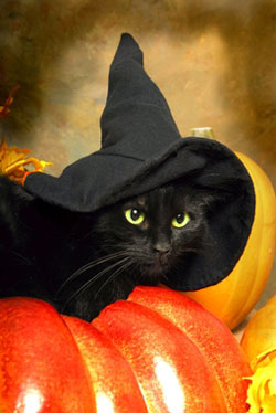 Keep your cat safe this Halloween Cat Safety Guide from Pets Best Pet Health Insurance for dogs and cats.