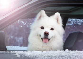 Too Cold to Leave Pet In Car?