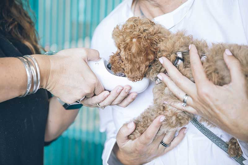 Insuring your puppy or kitten while they are young can help you save on future vet bills.