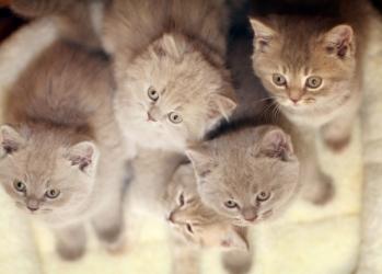Kitten Milestones