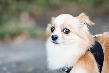 Find out what to do if your dog is scared of you.