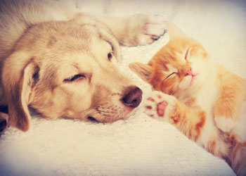 What to donate to animal shelters. From Pets Best Pet Health Insurance