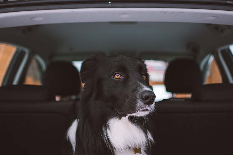 7 tips for keeping your pet safe while traveling.