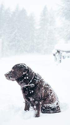 Learn more about preparing your pets for severe winter weather.