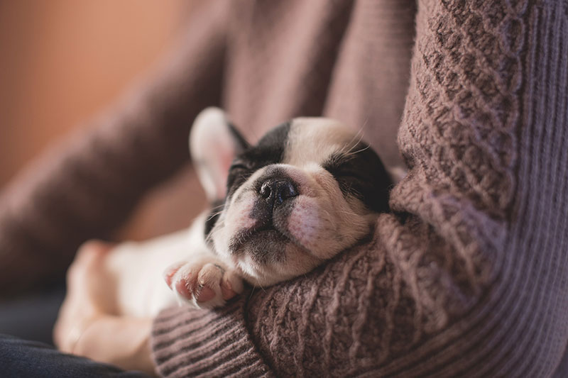 9 tips to help puppy proof your home.