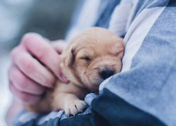 Making sure your puppy is vaccinated can help protect them from many risks.