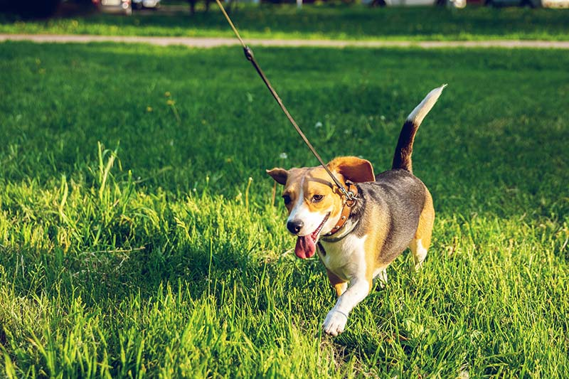 Learn how to protect your pet from the summer heat with these tips.