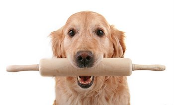 Tasty Homemade Dog Treat Recipe from Pets Best pet health insurance.