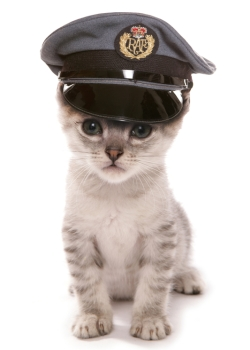 A kitten in an airline pilot's hat waits to board his flight with his owner.