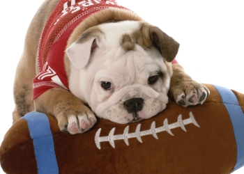 Tips for tailgating with your dog.