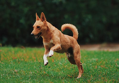 Learn what to look for when it comes to a torn or injured cruciate ligament in your pet.