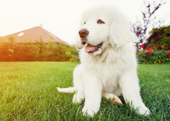 Puppy training tips to ensure your new puppy gets off to the right start.