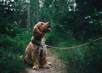 Keep your dog's age in mind when considering their training.